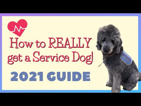 How to get a service dog | the process of getting a service dog in 2021