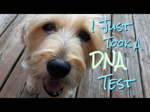 Should you get a dna test for your dog? what the heck kind of dog is this? | i just took a dna test!