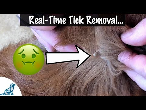 How to take a tick off your dog - professional dog training tips