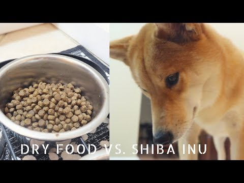 How to get your dog to eat dry dog food.