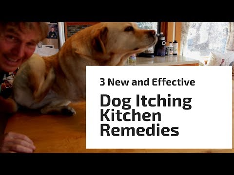 3 'new' and 'effective' dog itching kitchen remedies