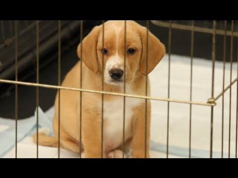 How to house train a puppy | dog training