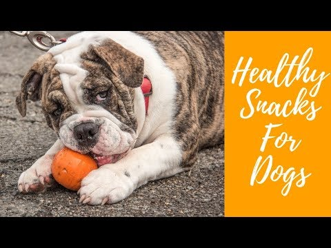 Can my dog eat this? 10 healthy snacks for dogs