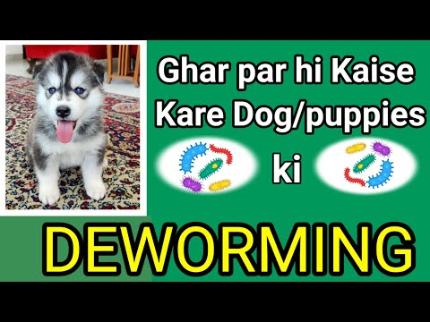 Easy puppy deworming at home   can i get worms from my dog   natural dewormers