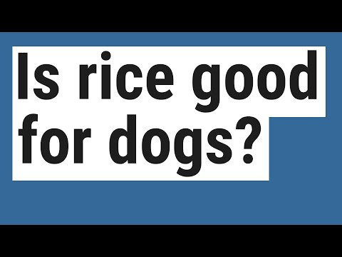 Is rice good for dogs?