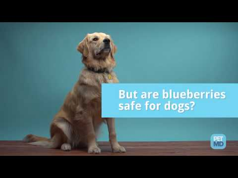 Are blueberries safe for dogs?