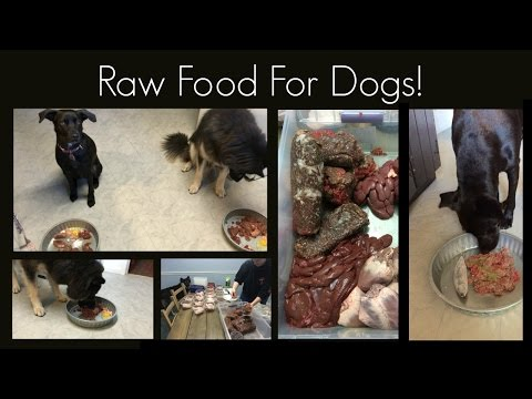 Raw food for dogs! basics and how to get started!