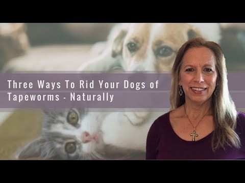 Three ways to rid your dog of tapeworms - naturally