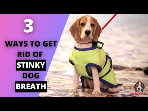 How to get rid of bad dog breath?