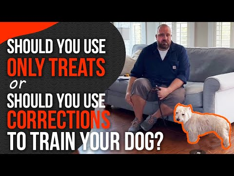 Balanced dog training or purely positive dog training? (it makes a big difference)