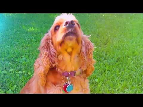How to stop dogs from pooping on your front lawn