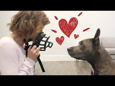 Muzzle training: how to get your dog to love the muzzle