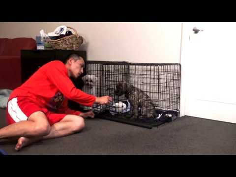 Help stop puppy cry or bark in crate at night. puppy crate training.