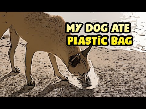 What to do if your dog eats plastic or plastic bag