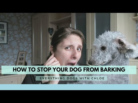 How to stop my dog from barking at everything - how to stop my dog barking