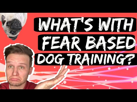 What are force free dog training and fear free dog training programs?