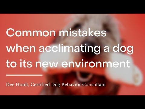 What are common mistakes to avoid when acclimating a dog to a new environment?