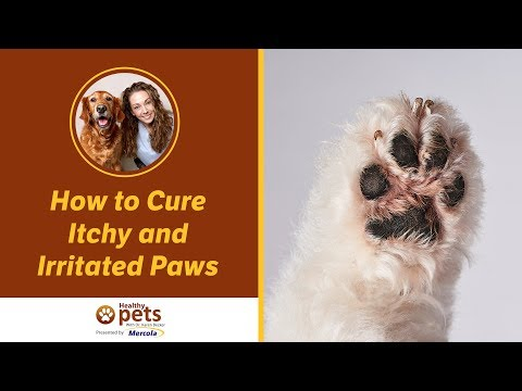How to cure itchy and irritated paws