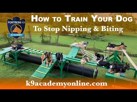 How to train your dog to stop biting & nipping - using the leave it command
