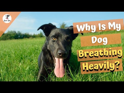 Why is my dog breathing heavily? common causes?