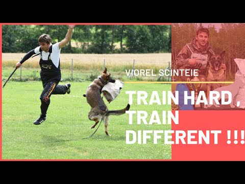 This is how to train a dog protection !!! learn how to train a dog