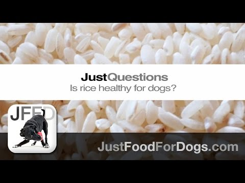 Just questions: is rice bad for dogs? | justfoodfordogs