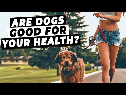 Are dogs good for your health? (do dog owners live longer?!)
