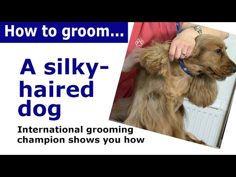 How to groom a cocker spaniel - and other silky haired dogs