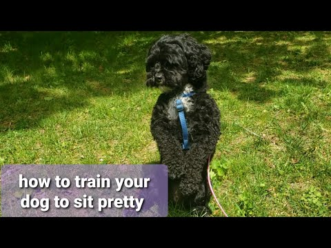 How to train your dog to sit pretty