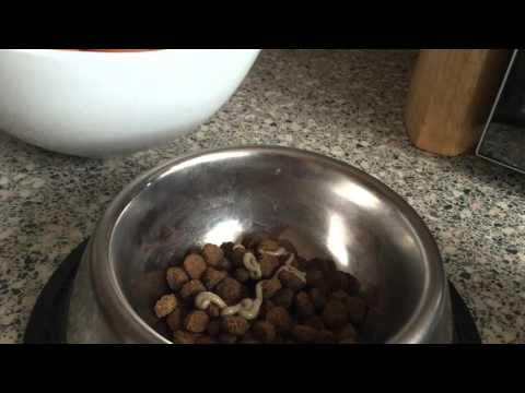 How to stop your puppy eating it's poo