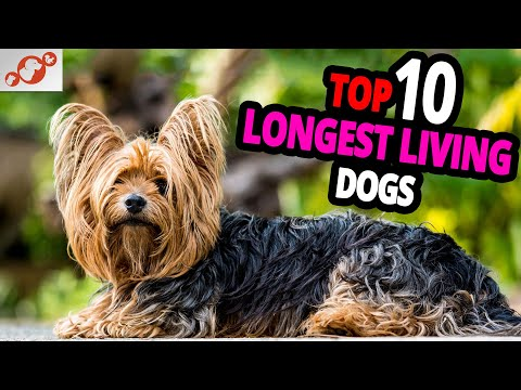 🐕 longest living dogs – top 10 dog breeds that live the longest!