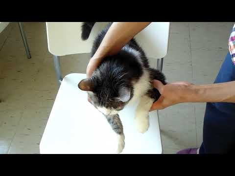 Second update: coconut oil as flea repellent for cats & dogs -- july 29, 2019
