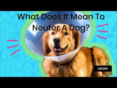What does it mean to neuter a dog ?