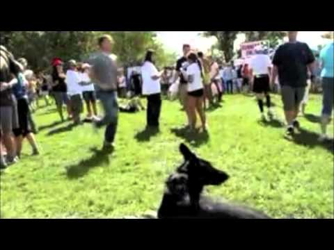 Advanced e-colllar obedience- how to use an electric dog training collar to train a dog