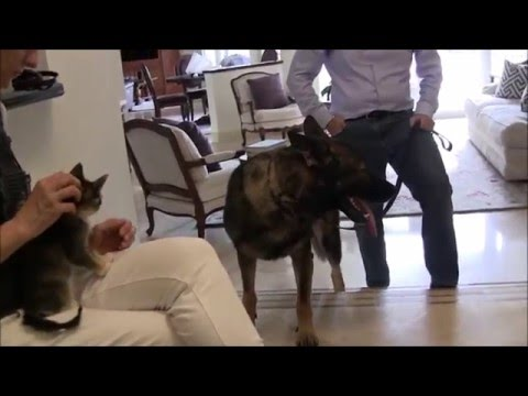 German shepherd destroys cats! can he be stopped?