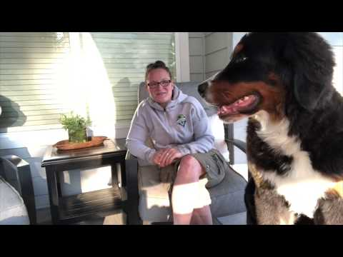 How to buy a bernese mountain dog puppy during the pandemic. where to buy a berner puppy now!