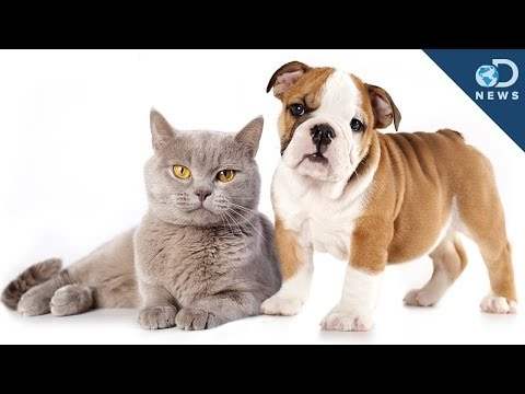 Are cat people smarter than dog people?
