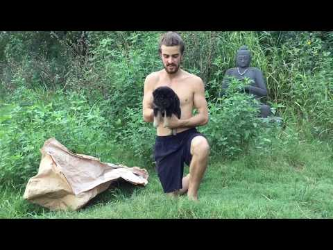 Getting rid of and killing fleas on puppies dogs and pets naturally with diatomaceous earth