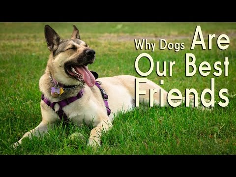 Why dogs make great friends