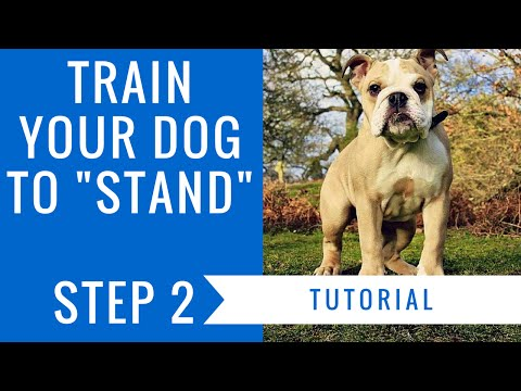 How to train your dog to stand: step 2 tutorial