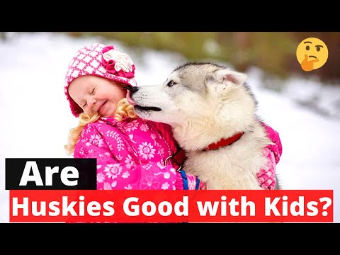Are huskies good with kids? are huskies family dogs? 🤔