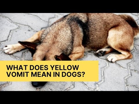 What does yellow vomit mean in dogs?