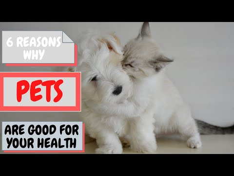 6 reasons why pets are good for your health ✔