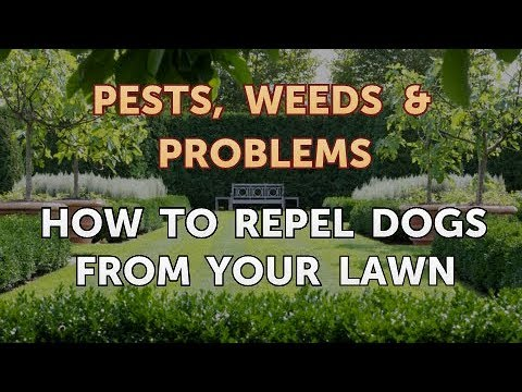How to repel dogs from your lawn