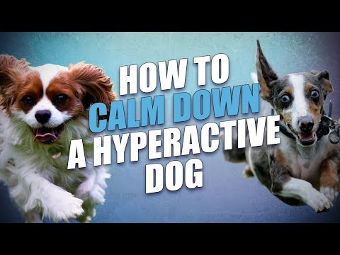 How to calm down a dog (for hyperactive and overexcited dogs)