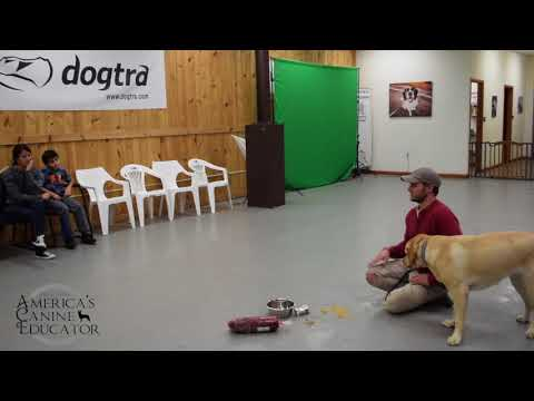 Stop food aggression-dog training with america's canine educator