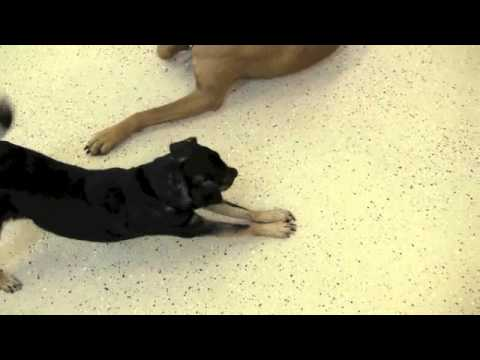 How dogs show affection?