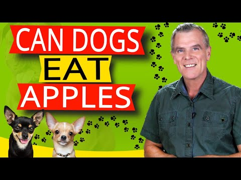 Can dogs eat apples (7 benefits and how much?)