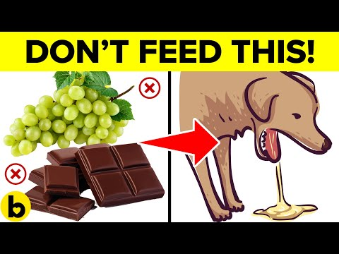 9 foods that will kill your dog