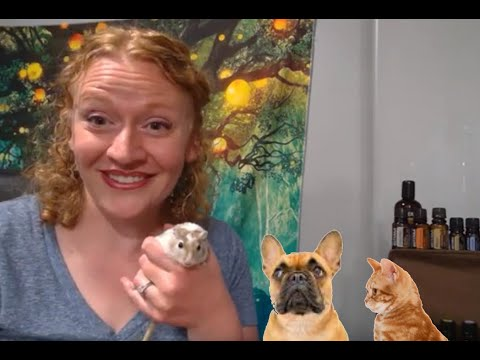 Essential oils for pets - are they safe? for dogs? cats? how do i use them?